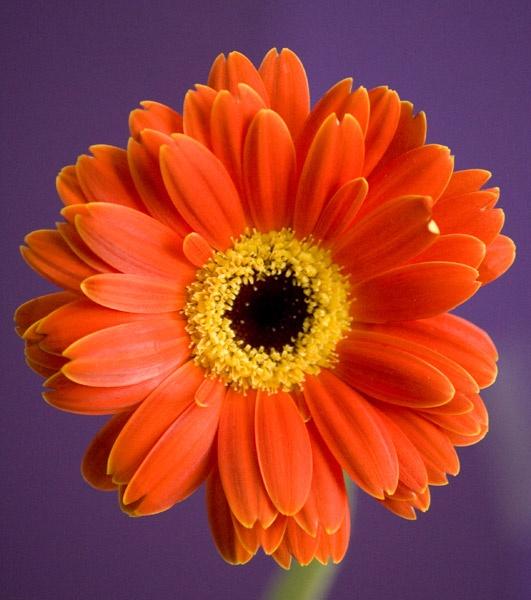 Flower Experiment 1 by rowarrior