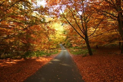 autumn at shugborough by xstevex