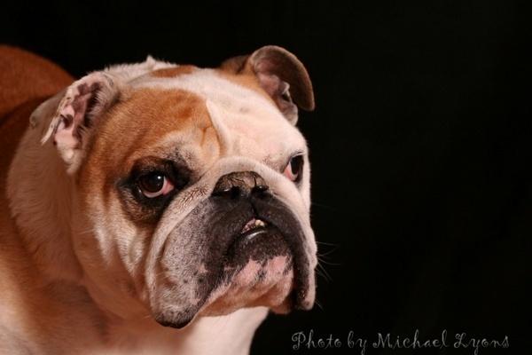Baxter by Georgias_Dad
