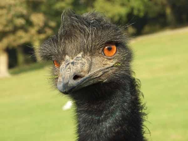 ostrich by vinnyc