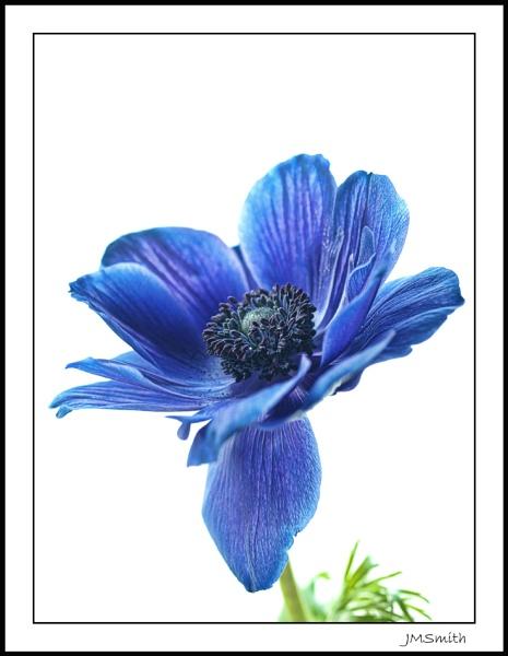 Blue by janehewitt