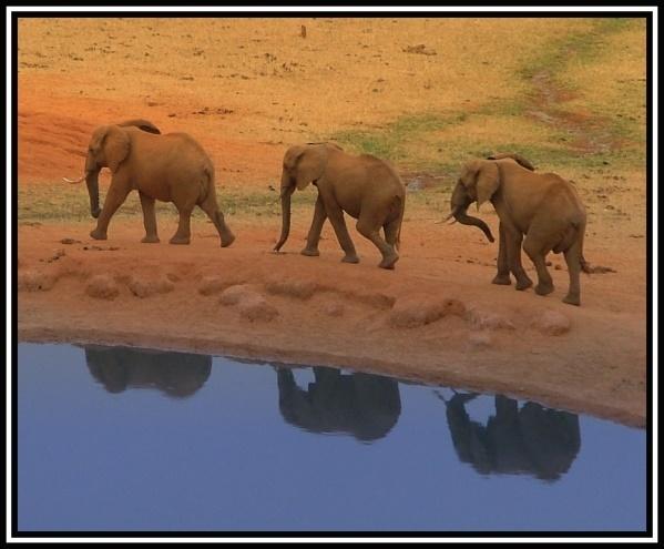 Three Elephants From Tsavo by sybilla
