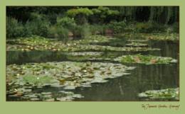 Monet's Pond 2