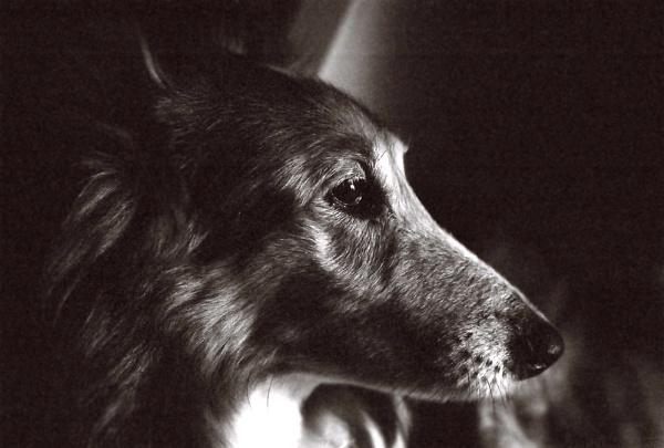 Old Dog by Josh_R