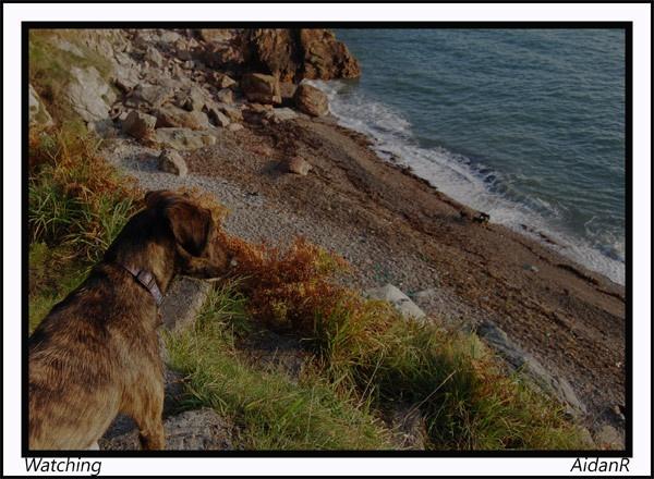 Watching by Ridgeway