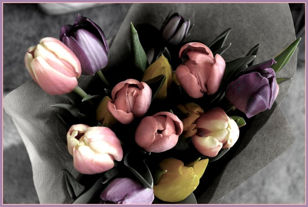 Tulips my love.... by clur