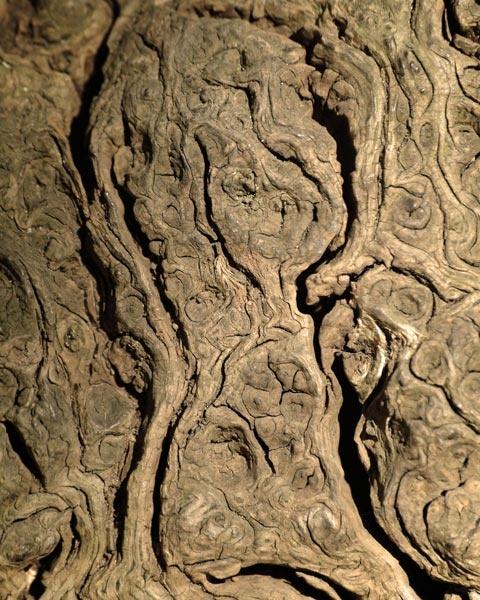 Tree grain by alastairwilson