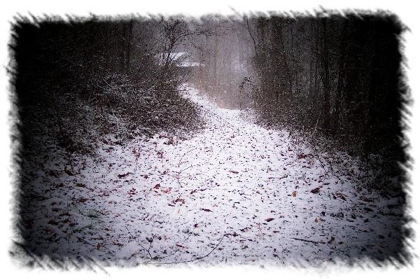 snowy pathway by dawnmichelle