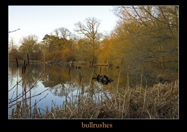 bullrush by trollyd