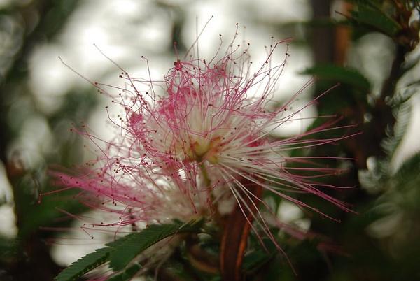 Spidey flower by Lindaephotozine