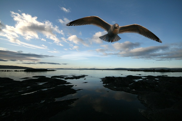 Seagull checking by EllieEdge