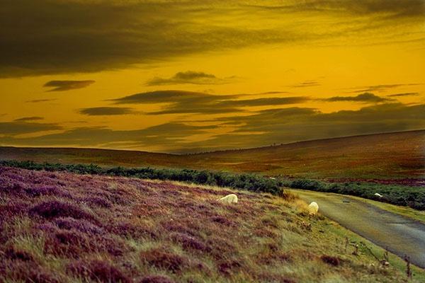Spooky Landscape by a1chap