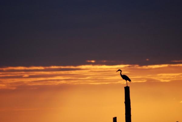 Heron post by dragarth