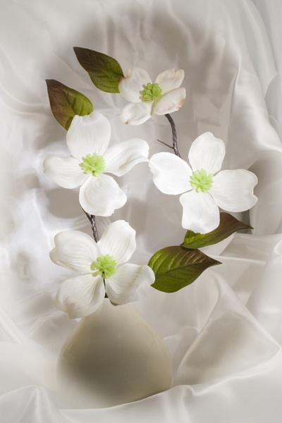 Silk Vase by freds