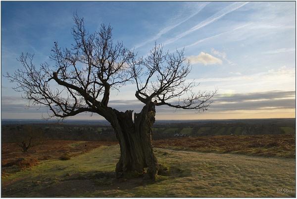 Tree of Sighs by TelStar