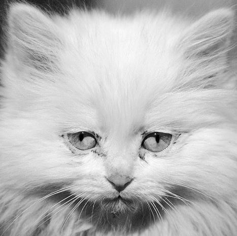 sad cat by bearvii