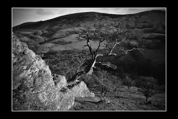 A tree on Caer Caradoc by Dick_Pigg