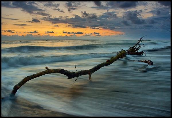 Driftwood II by iwool