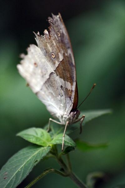moth et al by _Helena_