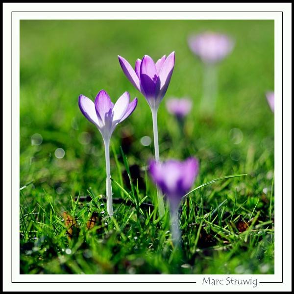 ? spring ? by Strobe