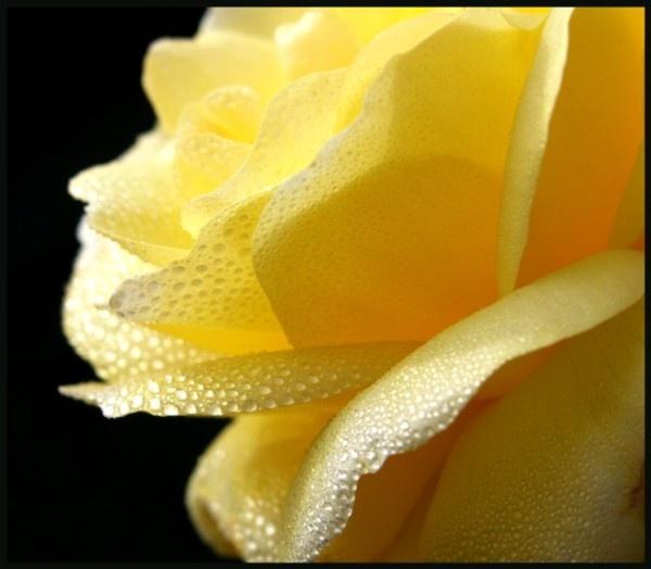 Lemon Sorbet by Hozzell