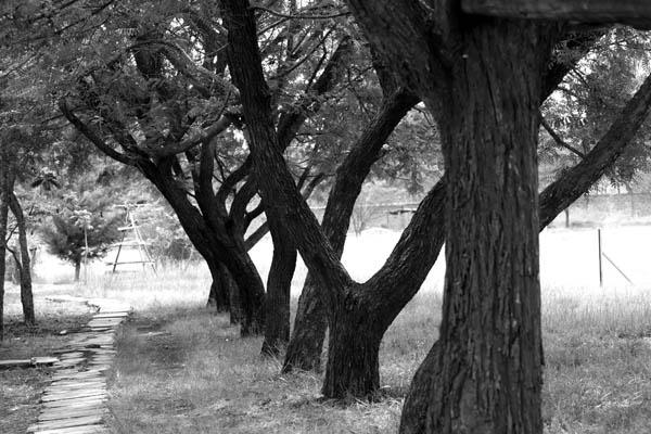 lone path by mohdzain
