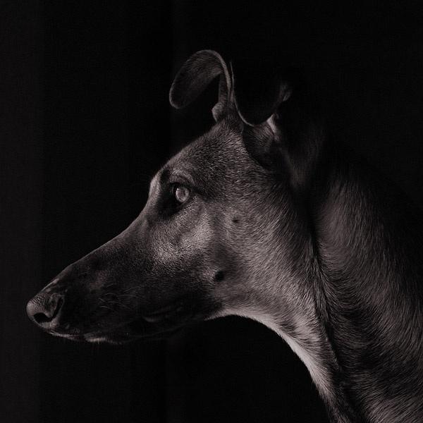 Portrait by vogelsang