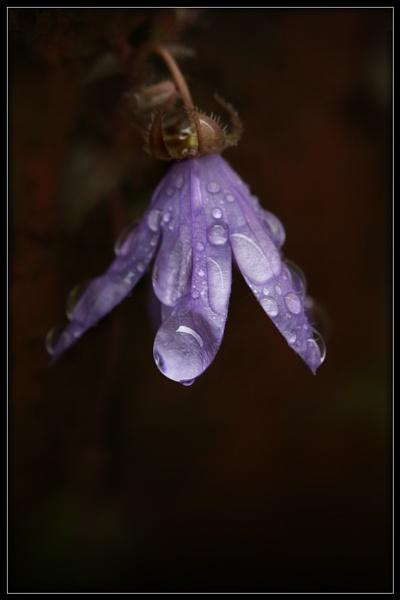 Purple Rain 2 by Morpyre