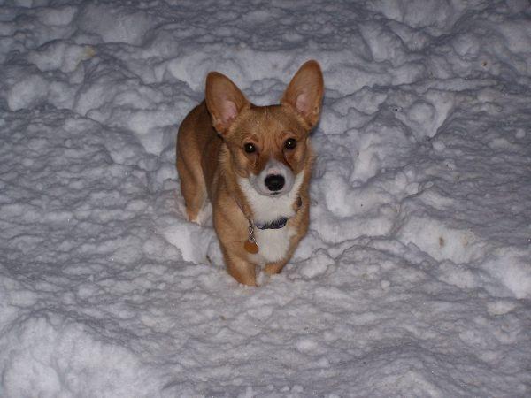 Snow Pixie by Mychael