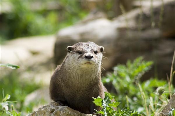 Otter 2 by spaldingd