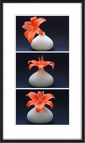 Tri~lily by KKmoments