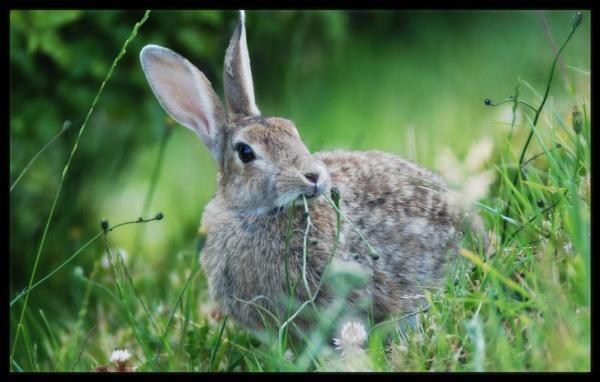 Big Bunny by possumhead