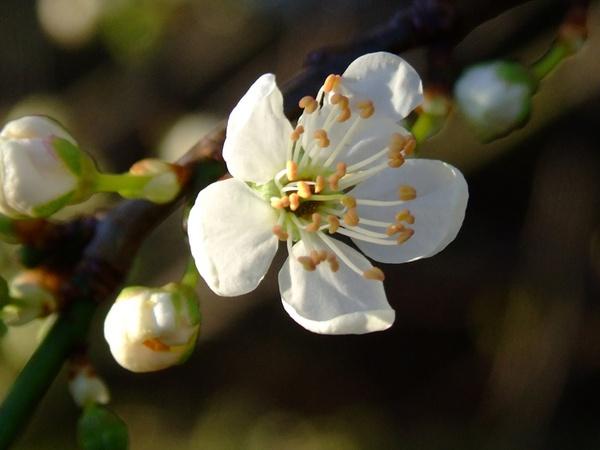 Springtime Is Near... by Traceyflowerpots