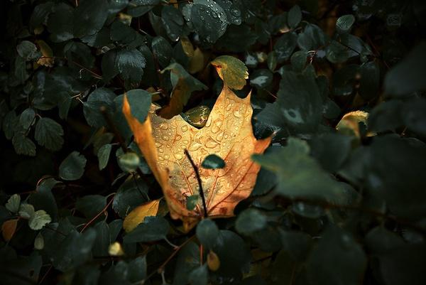 Hidden Yellow by johnroshka