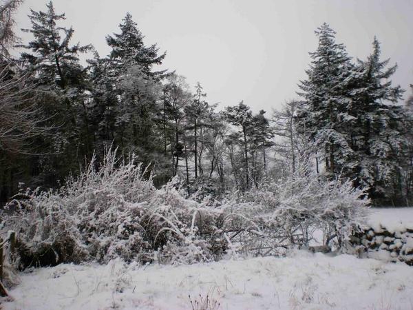 Wood In Winter by jennyk