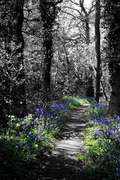 Blue Bell Woods by Patrick_Moran