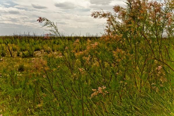 Roadside Weeds by gajj