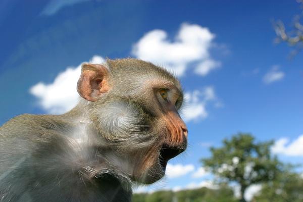 Speeding Monkey by teddy