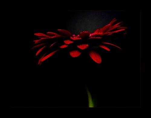 Flower 143 by lizziew