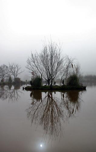 Pond in fog by angelamary