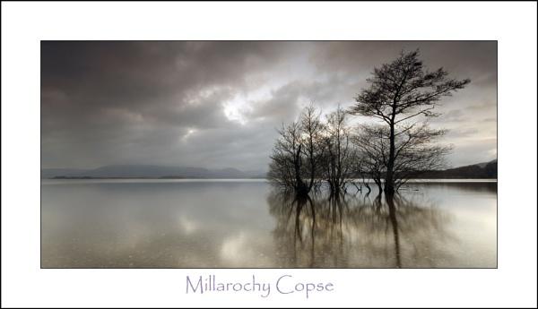 Millarochy Copse by phillips