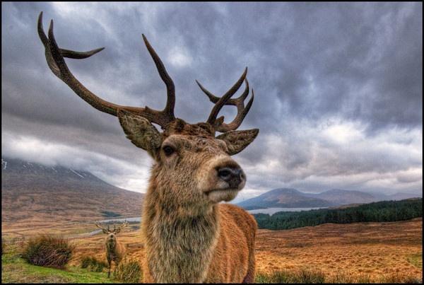 Highland Guardians by CraigF