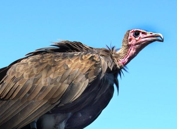 Bird of prey by Lamby6