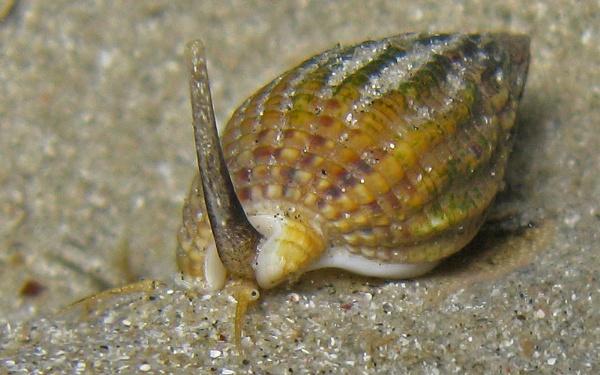 Macro mollusk by jonny250