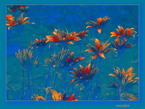 Turquoise by museebfoto
