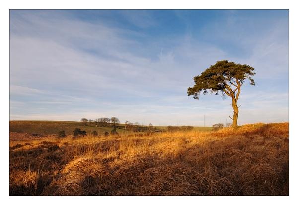 Priddy Tree by blackbird