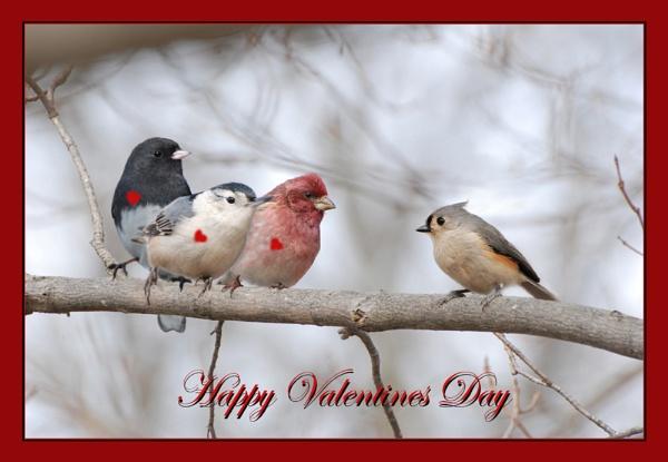 Love birds by GlenD