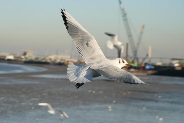 Feeding the Gulls by LesleyJ
