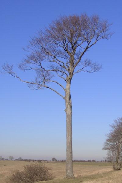 tree by ellaw