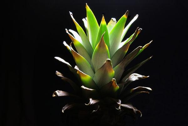 Pineapple by wipka84